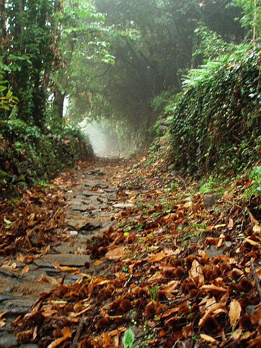 Kelias į šv. Kutlumušo vienuolyną (gr. Μονή Κουτλουμουσίου)[I]. [/I]2007 m. lapkritis, Šv. Atono kalnas. Arūno Bingelio nuotrauka